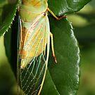 Cicada by masterpiececreations