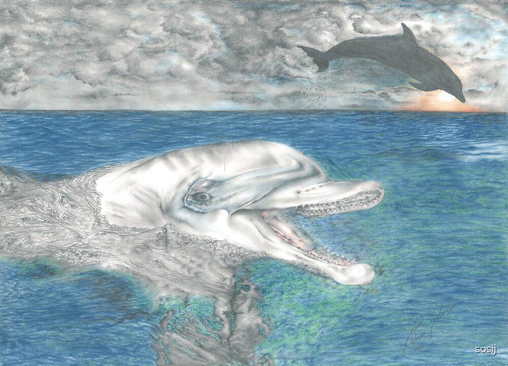 dolphins by sosij