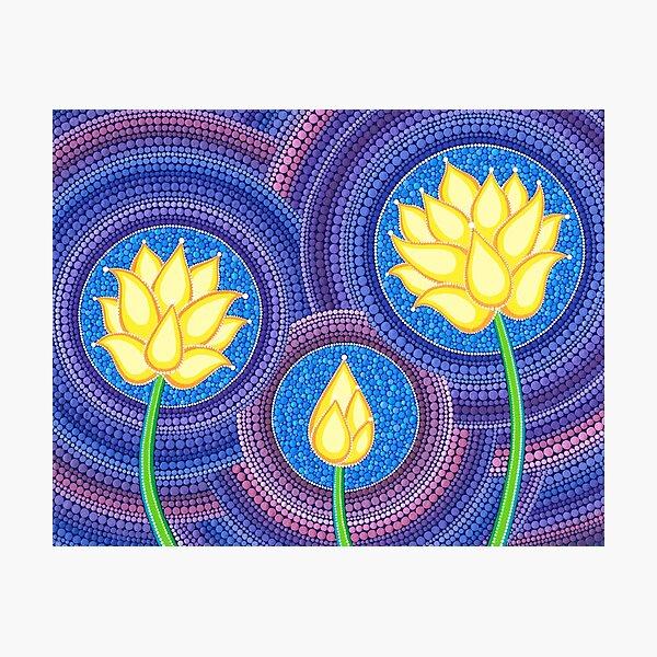 Dreamy Lotus Family Photographic Print