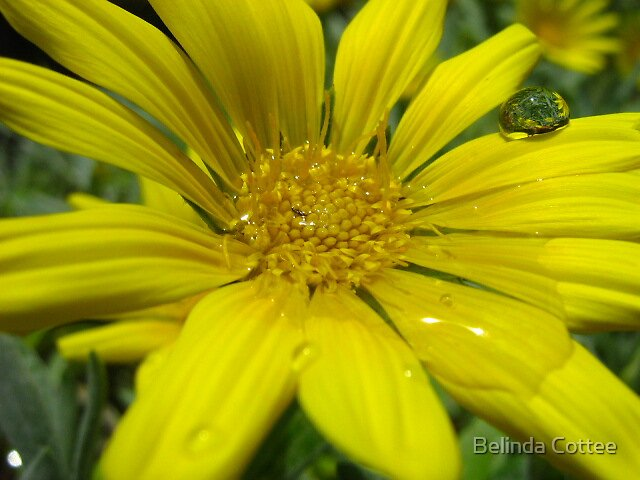 after the rain by Belinda Cottee
