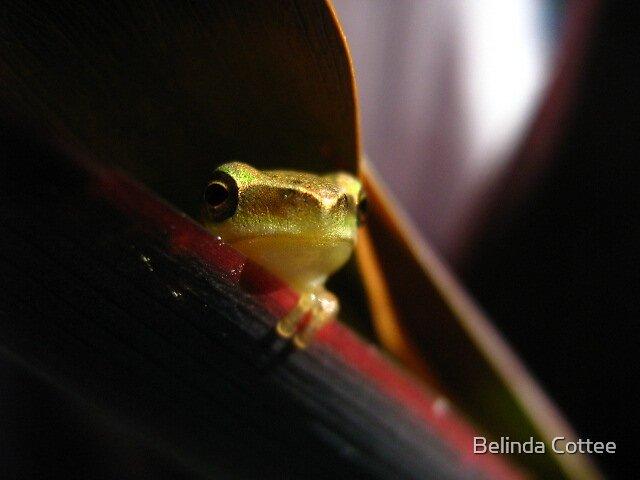 seductive frog by Belinda Cottee