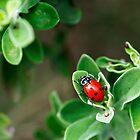 Ladybug Nursery by Bill Morgenstern
