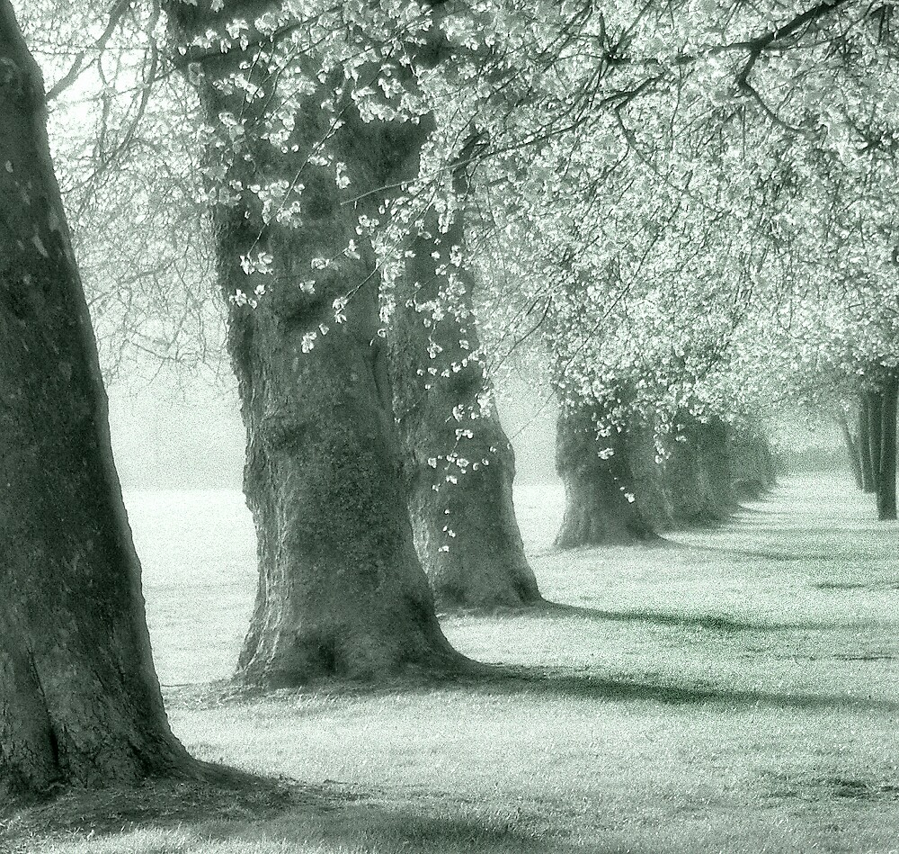 autum trees by Jon Brayford