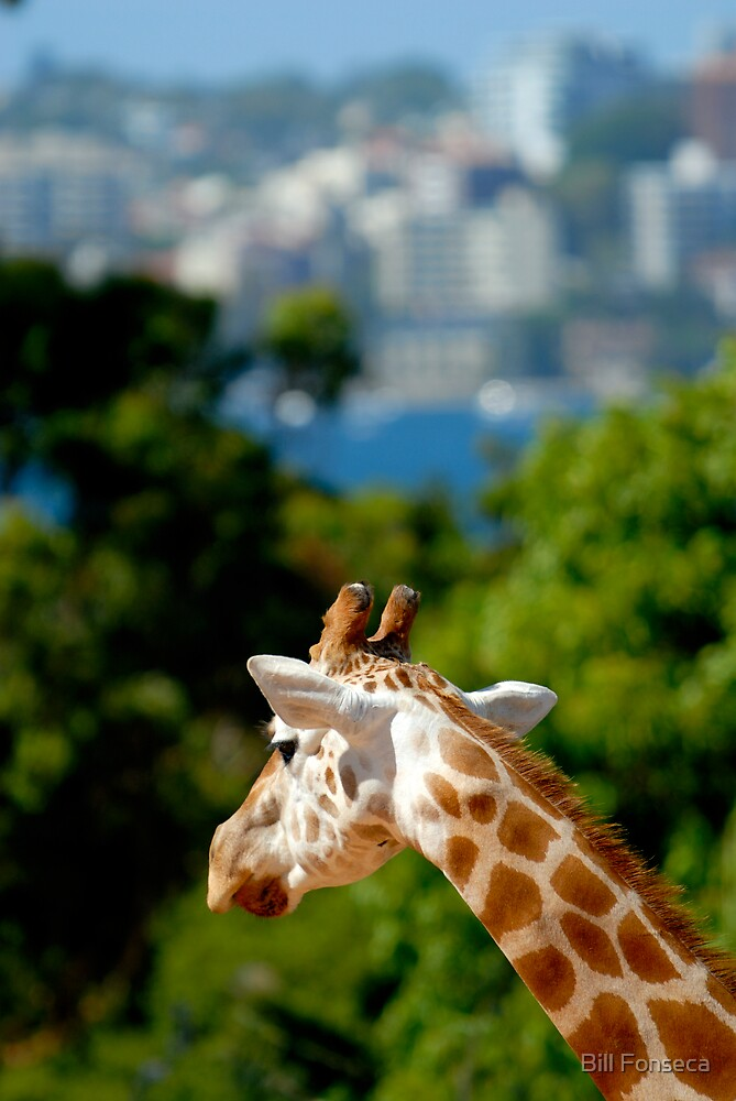 Giraffe View by Bill Fonseca