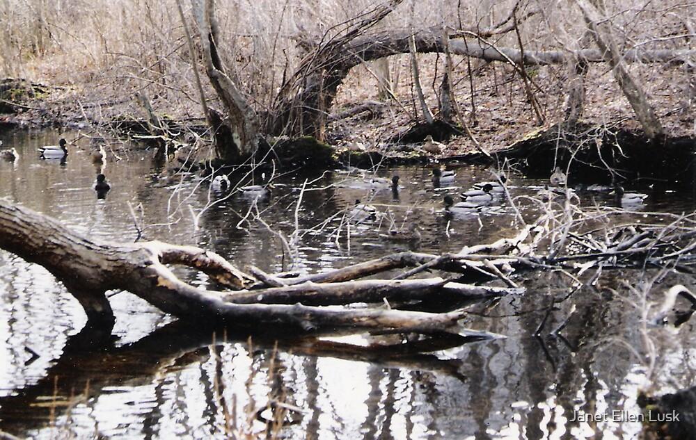 Phillip's Creek with Ducklings by Janet Ellen Lusk