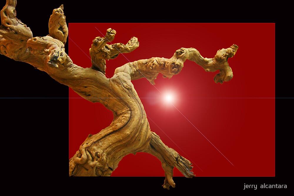 Driftwood by jerry  alcantara