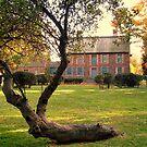 Tree Behind Dey Mansion, Wayne NJ by Jane Neill-Hancock