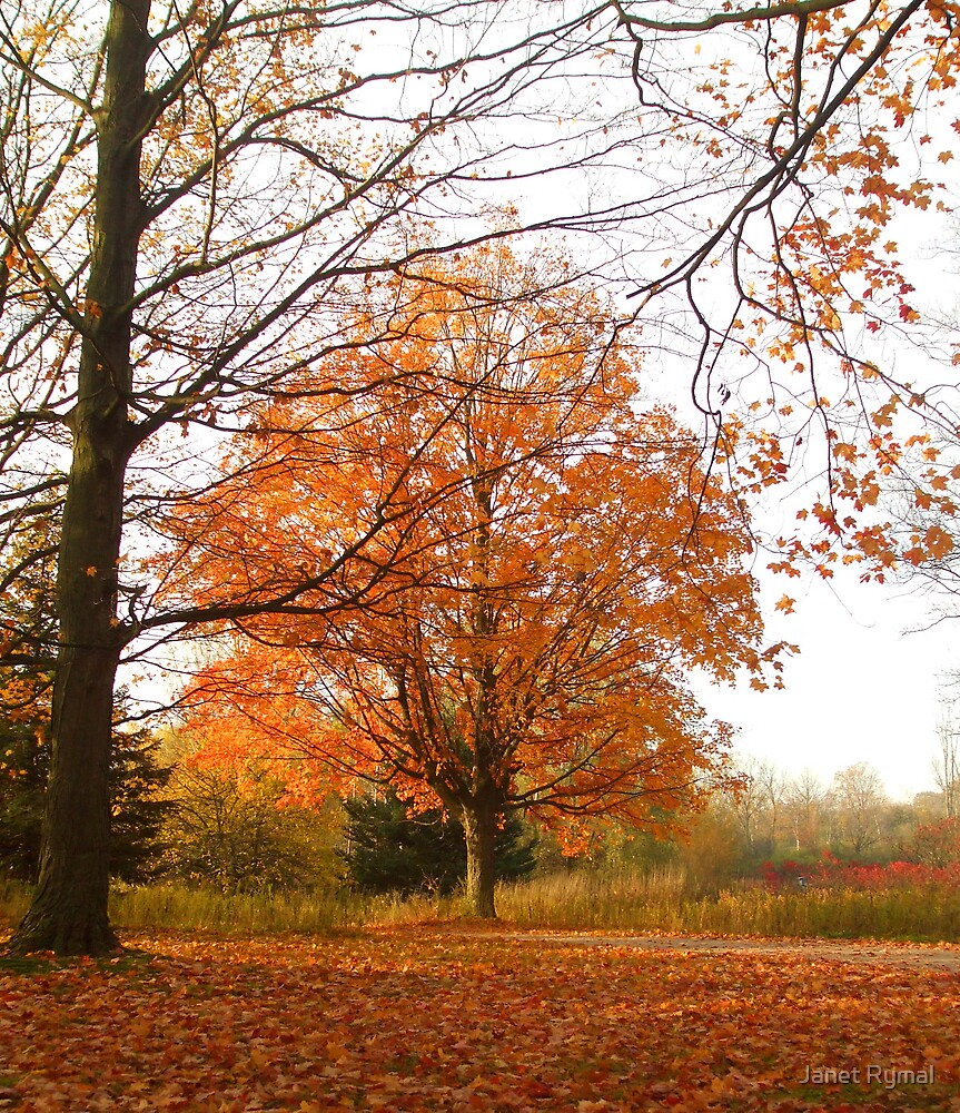 Orange Autumn by Janet Rymal