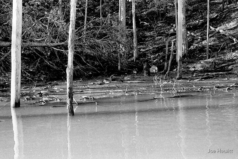 Trees and Water in Black and White by Joe Hewitt