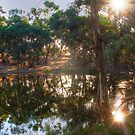 Gum trees by the water, Thorn Park by the Vines by Mark Richards