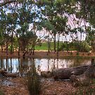 Gum trees & Vineyards, Thorn Park by the Vines by Mark Richards