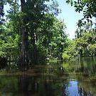 Swamp 6 by Lainey Simon