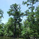 Swamp 7 by Lainey Simon