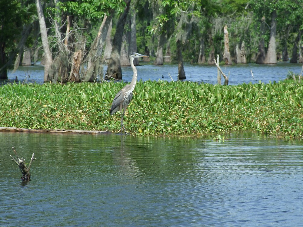 Swamp 16 by Lainey Simon