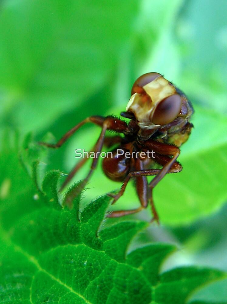 A Weird Fly by Sharon Perrett