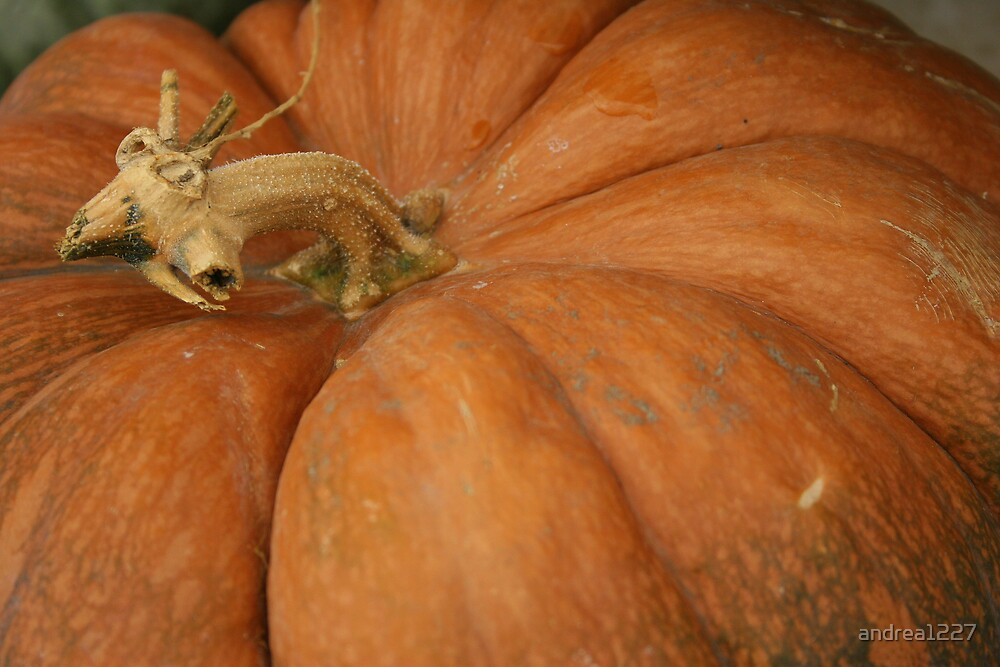 Pumpkin Macro by andrea1227