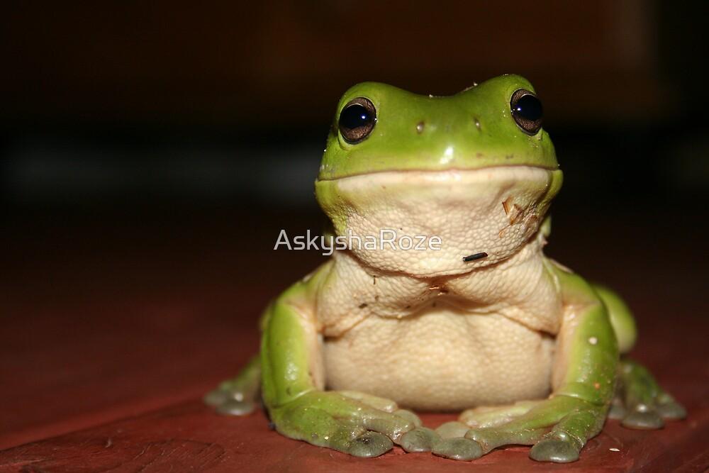 Sitting Frog by Kylie  Metz