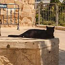 Black cat in Jerusalem by Nenad  Njegovan