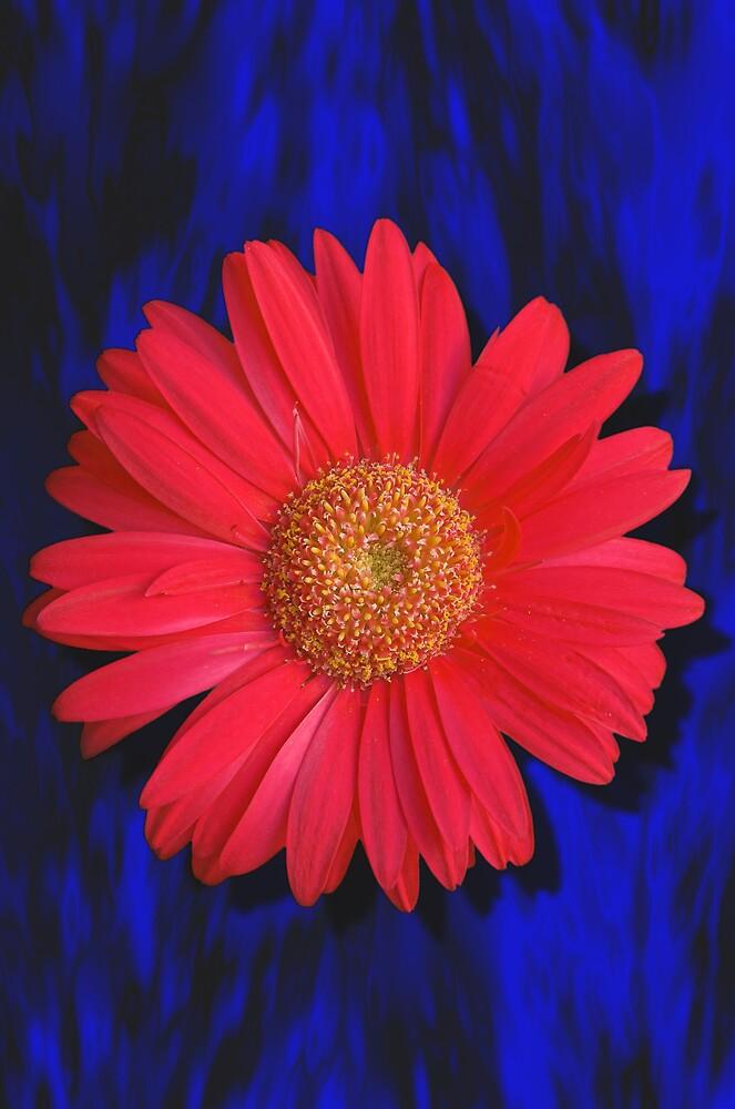 Flower by douwe