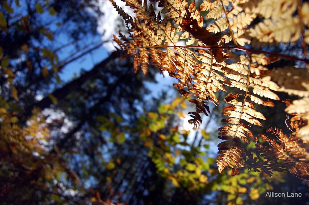 Fall Fern by Allison Lane