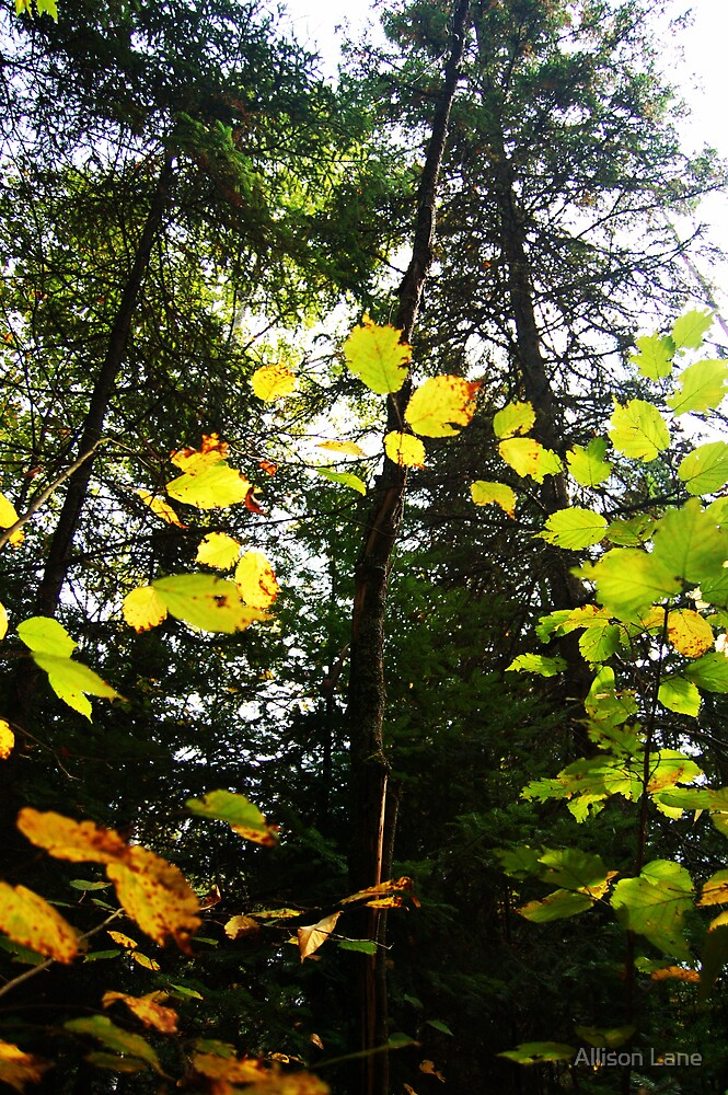 Leafy Arch by Allison Lane