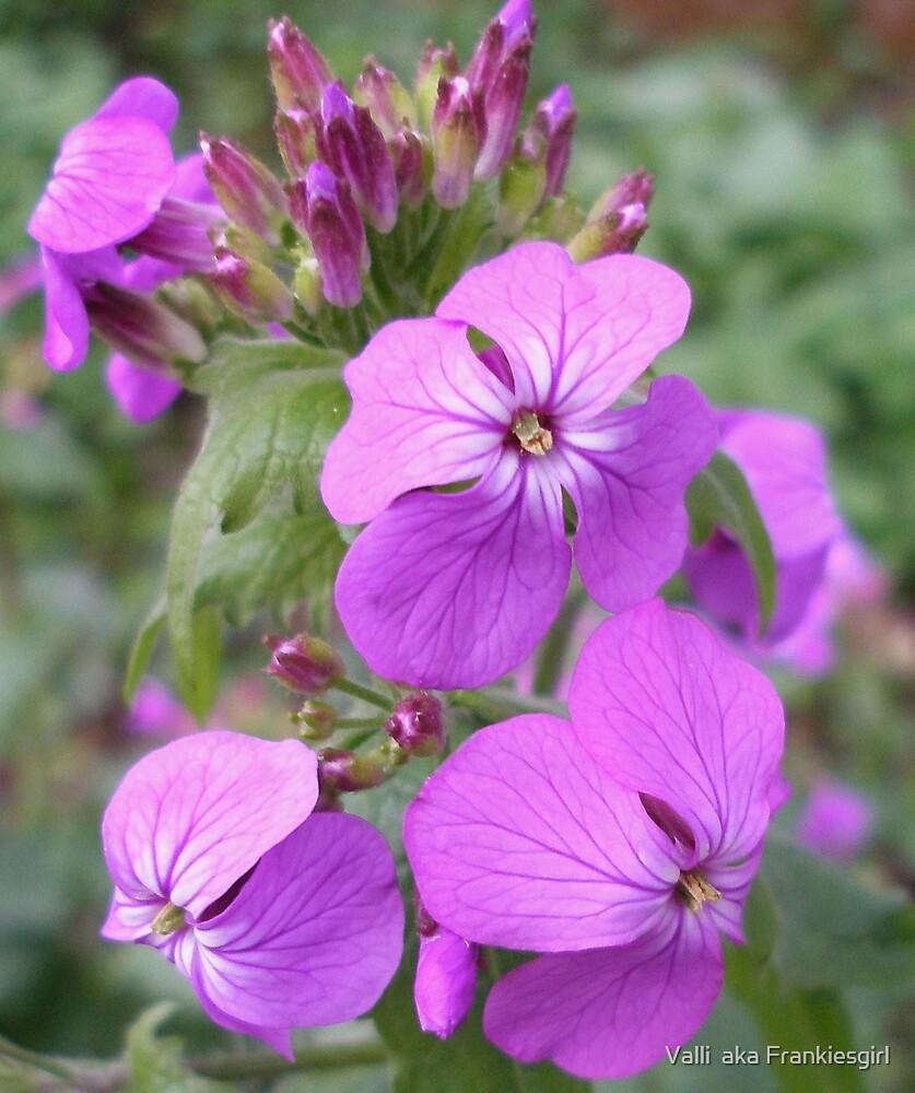 Purple  by Valli  aka Frankiesgirl