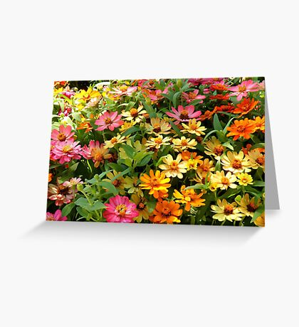 Field Of Colors Greeting Card
