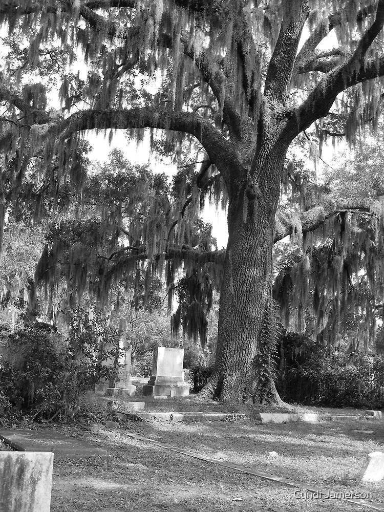 Peaceful Oak by Cyndi Jamerson