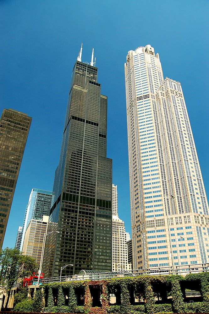 The Sears Tower by Tim Ray