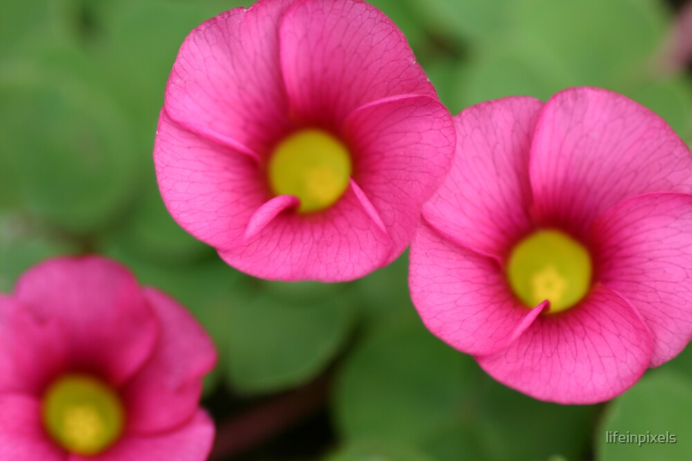 3 flowers by lifeinpixels