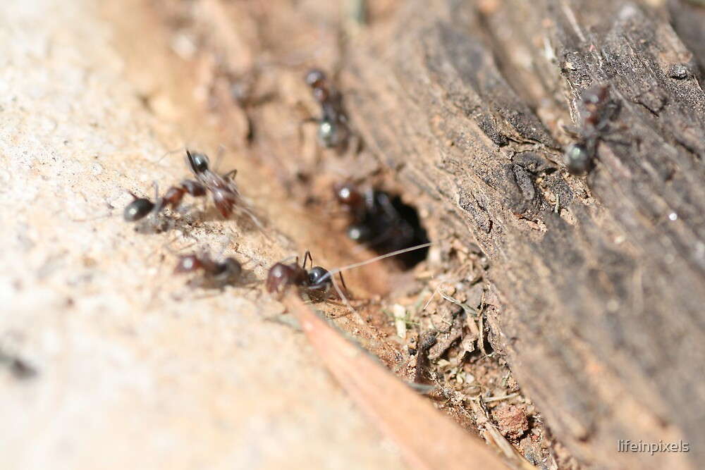 Ants getting ready by lifeinpixels