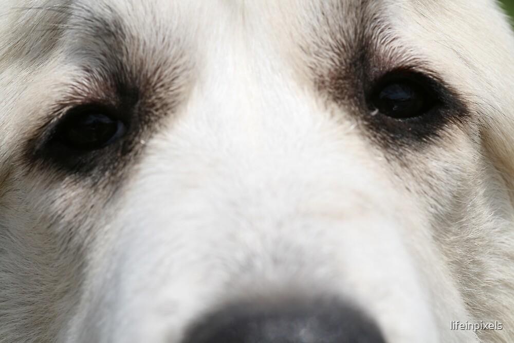 Dog love by lifeinpixels