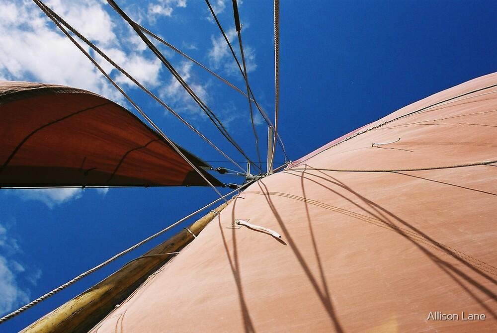 Sails by Allison Lane