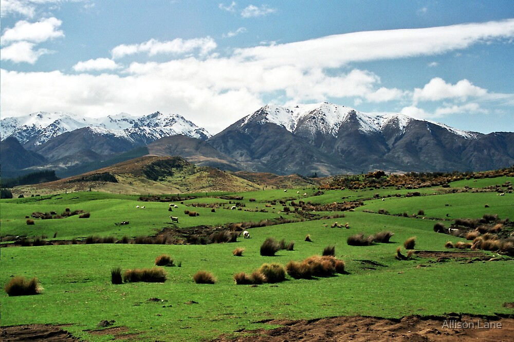 New Zealand Mountains by Allison Lane