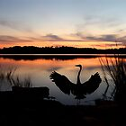 Heron At Sunset by Amy Jackson