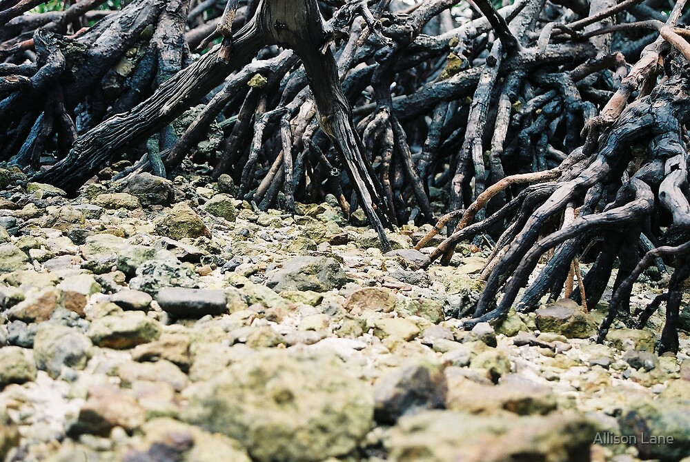 Rocky Roots by Allison Lane