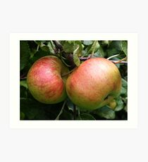 Apples, tinted in the cool light of autumn. Art Print
