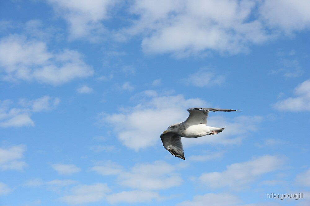 seagull by hilarydougill
