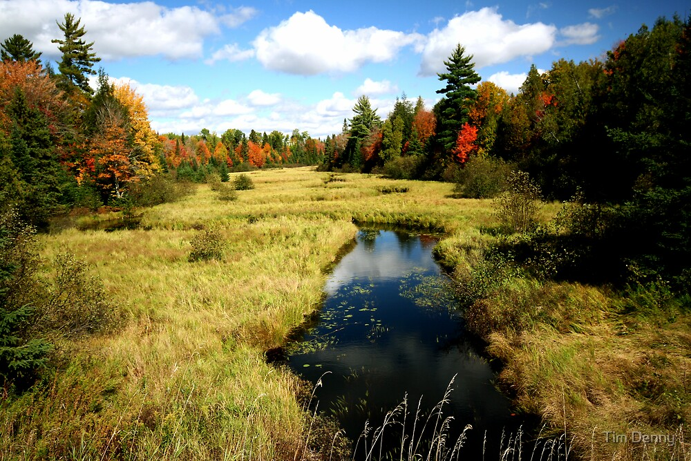 Grassy Waters Flow by Tim Denny
