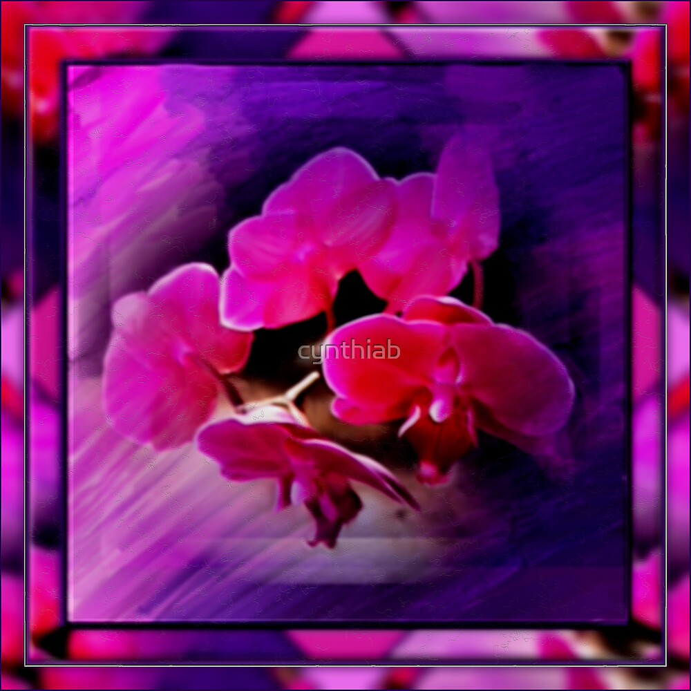 orchids by cynthiab