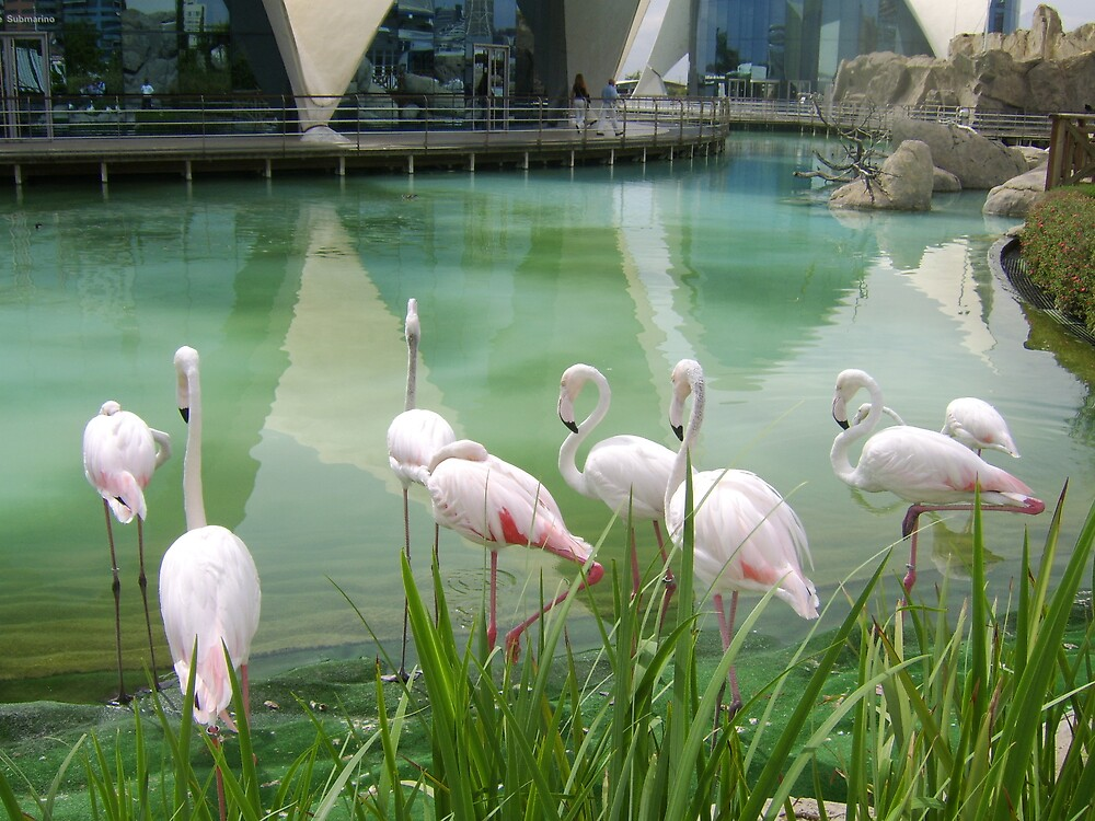 Flamingoes by Ruth Bretherick