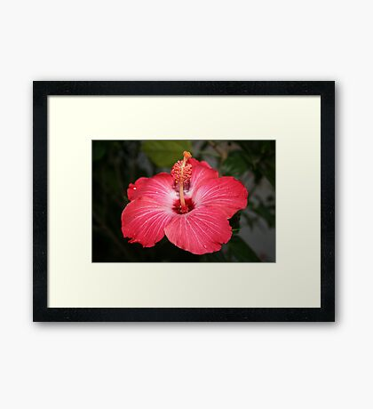 A BIT OF FLORIDA Framed Print