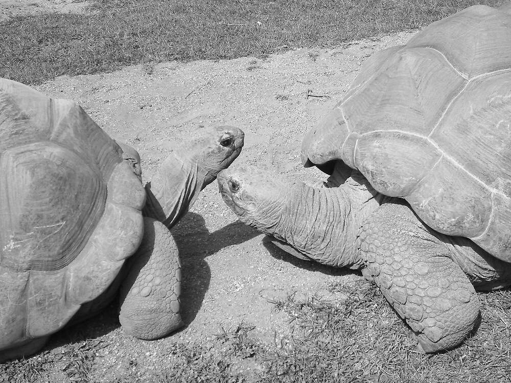 Tortoise kisses. by gemmagrace