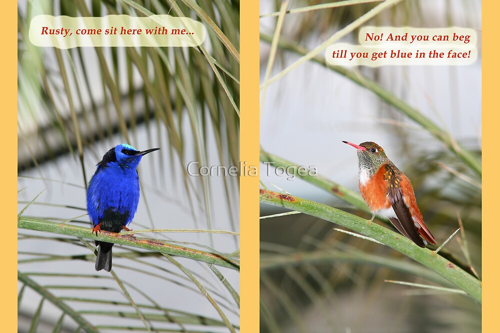 Rusty and Blue 1 by Cornelia Togea