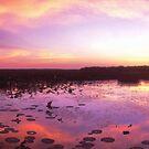 Gunumeleng - Northern Territory by Tony Middleton