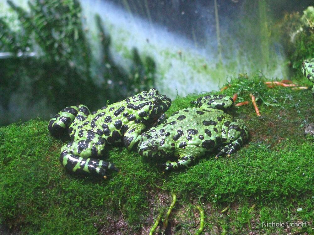 Frog Love by Nichole Schoff