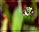 Gentle Rain by Chelsea Kerwath