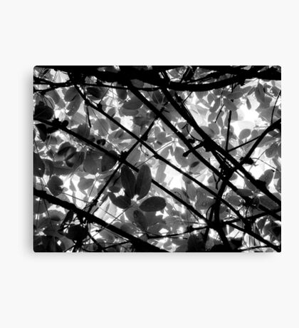 Natural Abstract Canvas Print