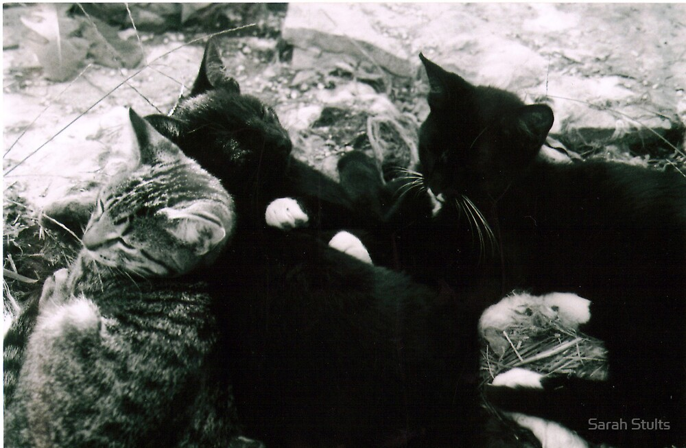Kittens Sleeping by Sarah Stults