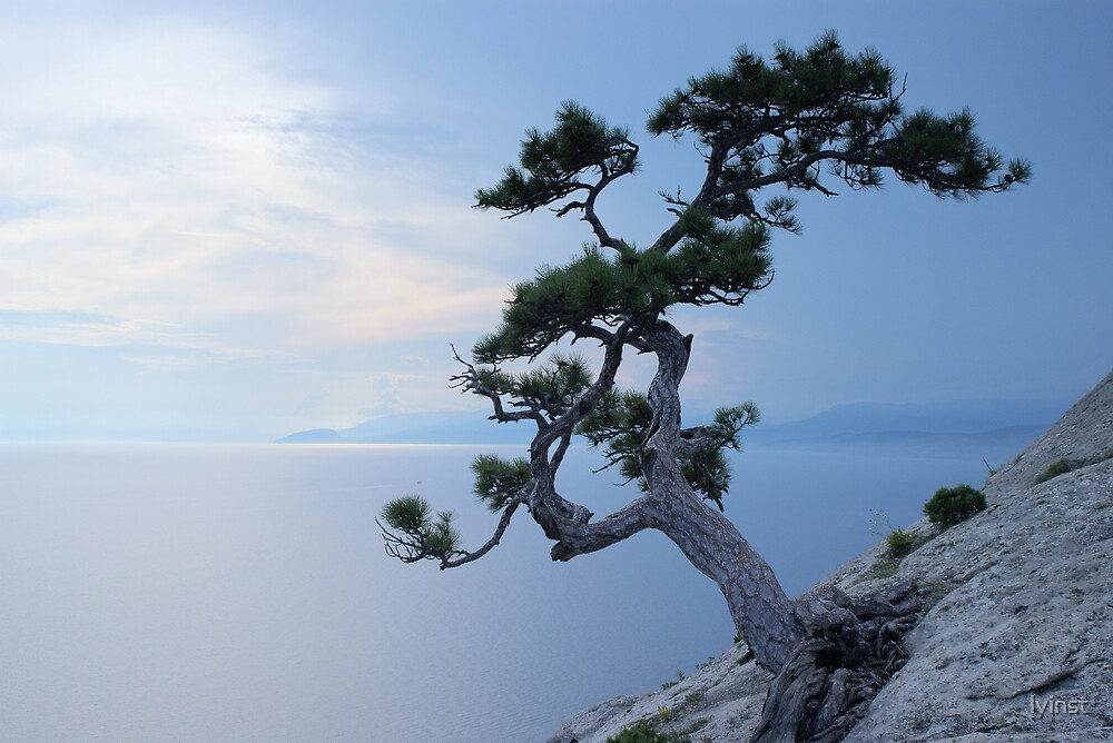 Alone tree on the cliff by lvinst